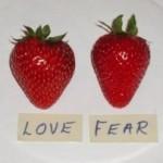 Strawberries-Fresh-Day1