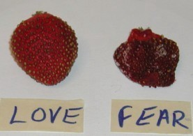Strawberries-Fresh-Day4