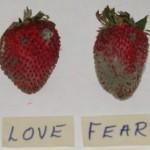 StrawberriesExample1